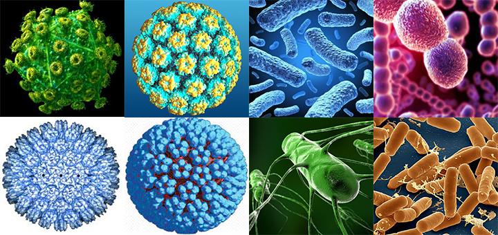 İnfeksiyalar ile ilgili görsel sonucu